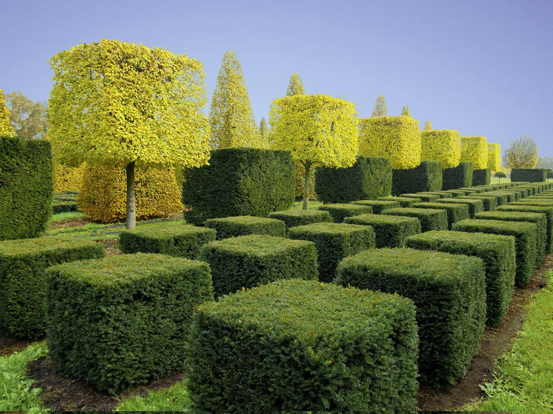 Стрижка деревьев и кустарников